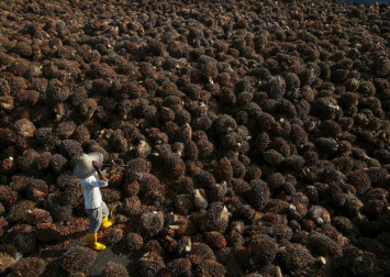 EU palm oil ban sows bitter seeds for South-east Asian farmers