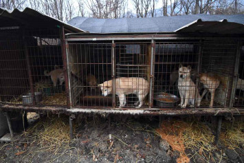 Killing dogs for meat illegal, rules S. Korean court