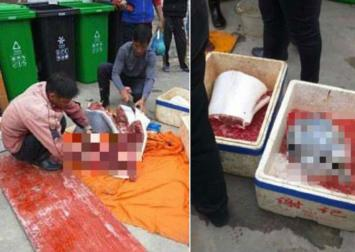 Authorities probe alleged butchering of baby white dolphin in China