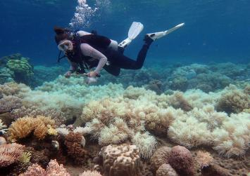 Climate change leaves two thirds of Great Barrier Reef bleached