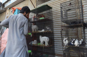 Hundreds of abandoned animals die after Pakistan pet markets shut as coronavirus spread