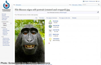No more monkey business: lawsuit over macaque's 'selfie' is settled