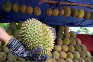 Hotels in Malaysian town fully booked for durian fest