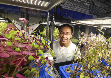 How Hong Kong is catching up to Singapore in urban farming tech