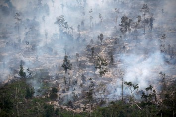 Indonesia gets United Nations funds to fight climate change, deforestation