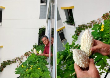 Garden in the sky: Uncle's love for gardening bears fruit at HDB flat