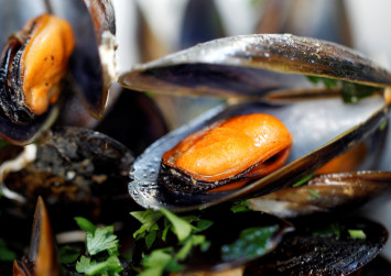 Plastic found in mussels from Arctic to China enters human food