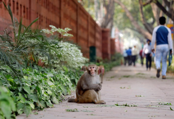 China has tweaked genes to create five mad monkeys. Is that ethical?