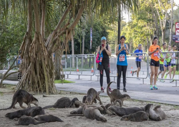 Otter alert at Gardens by the Bay during Standard Chartered Singapore Marathon