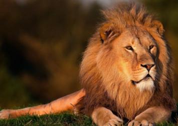Lion kills young worker at North Carolina wildlife sanctuary