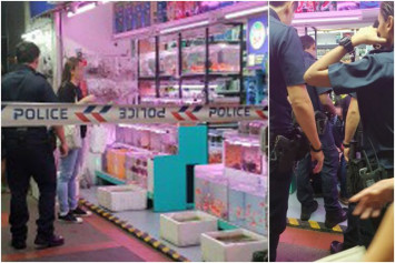 Duo arrested upon return to shop where they allegedly stole $12 aquarium pump hidden in woman's shorts