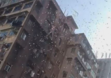 Banknotes falling from the sky send crowd into a frenzy in Hong Kong neighbourhood of Sham Shui Po