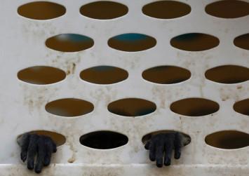 6 men arrested in Vietnam for killing, eating endangered monkey