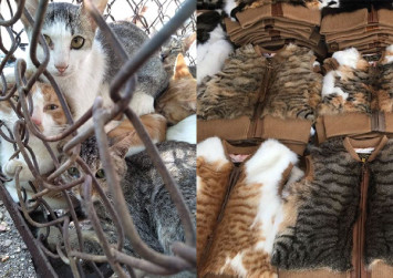 Cats are being boiled alive for their fur in China, says animal activist group