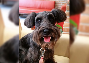 """This Singapore therapy dog fulfilled a patient's last wish and is a """"miracle worker"""" for some"""