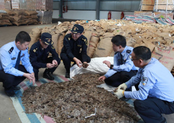 Smuggled pangolin scales extracted from around 50,000 pangolins seized in China