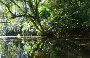 Secret life of the Amazon rainforest
