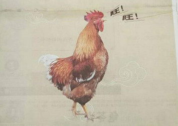 Malaysia sorry for Chinese New Year rooster ad cock-up