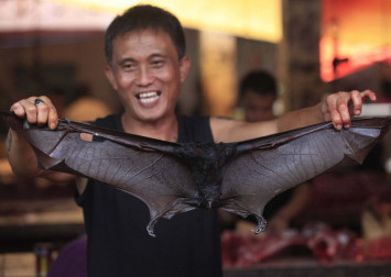 Restaurants in Indonesia take bat stew off menu for now amid coronavirus fears