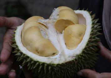 Mao Shan Wang durians in Malaysia now 50% cheaper due to coronavirus outbreak in China: Report