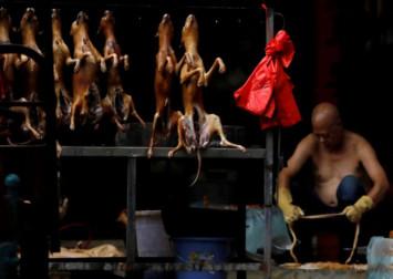 China bans trade, consumption of wild animals due to coronavirus