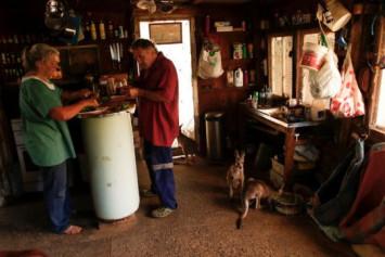 Australian couple battled wildfire to save house full of orphaned baby kangaroos