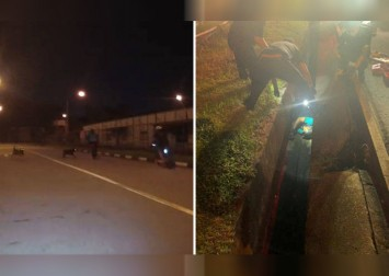 Stray dogs cause cyclist to fall into drain