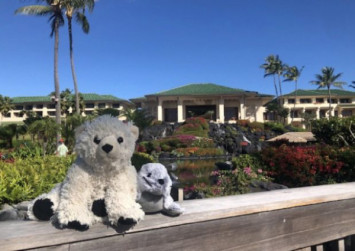 LOOK: Stuffed toys treated to 'extended vacation' after child left them in hotel