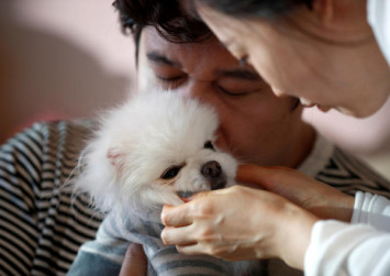 Like a son but cheaper: harried South Koreans pamper pets instead of having kids
