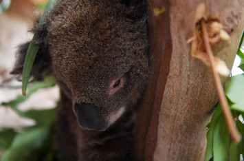 Australia govt commits $46m to wildlife fund as koalas, wallabies endangered by bush fire 'ecological disaster'