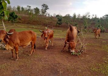 Muslim man beaten to death in India on suspicion of smuggling cows