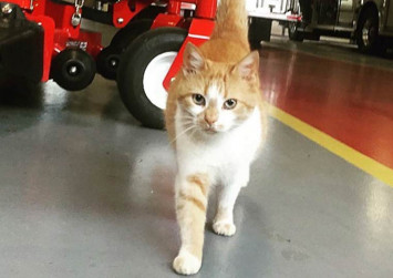 Photos: Fire station cat is an Instagram star with 20,500 followers