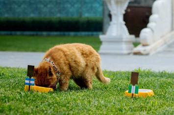 World Cup cat in China dies before event ends