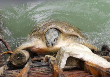 Firemen rescue turtle trapped near power station in Malaysia