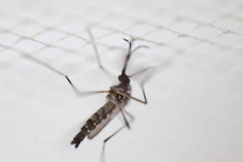Multidrug-resistant malaria spreading in Southeast Asia: Study