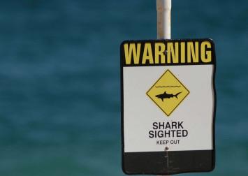 Australia kills 4 sharks after tourist attacks