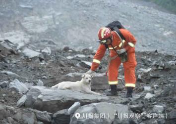 Dog in forlorn search for owner after China landslide: State media