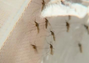 How a spider venom toxin could tackle malaria
