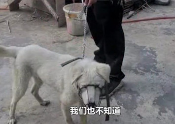 Chinese man adopts dog from shelter then kills it to satisfy dog meat craving