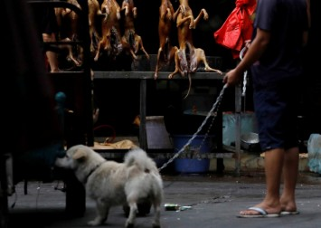 China's annual dog-meat fair opens; activists hope for last time