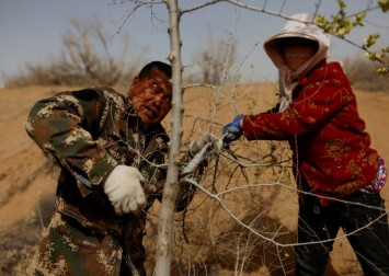 China farmers push back the desert - 1 tree at a time