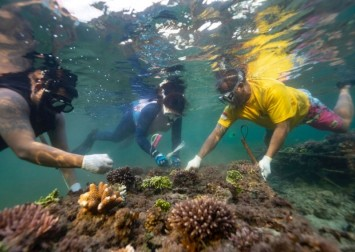 'Reef stars' promote new growth in Bali's dying coral ecosystem