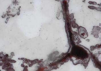 Oldest fossils point to life on Earth four billion years ago