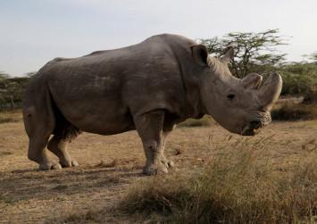 China postpones lifting of ban on trade of tiger and rhino parts