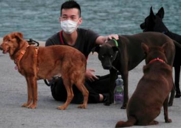 Quarantined dog tests negative for coronavirus in Hong Kong