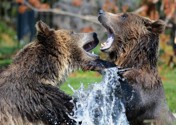 3 steps you can take when a bear market hits