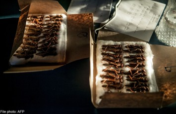Today's insects to be tomorrow's grub: Food experts