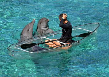 Dolphin Island team works round the clock to give tender, loving care