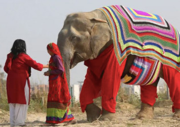 These elephant-sized knitted sweaters prove that there's still more to do to stop climate change