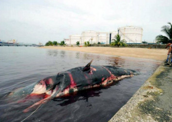 Dead whale Jubi Lee found in Singapore tells tale of scientific discovery